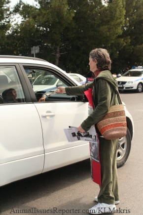 Demonstrator at Athens Fur Fair handing anti-fur leaflets to passing motorists Photo: Katerina Lorenzatos Makris