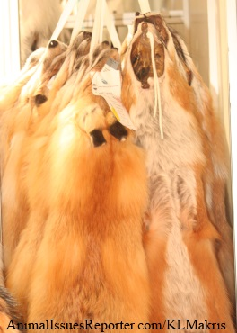 Fox furs hanging on rack at Athens Fur Fair 2012 Photo: Katerina Lorenzatos Makris