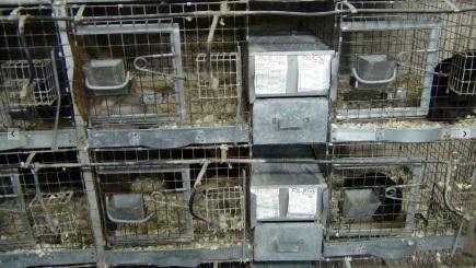 Cages at Valley View Chinchilla Ranch Photo: PETA
