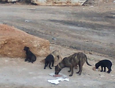 The Ghosts of Aspropyrgos rescue group feeds dozens of mothers and pups like these, says volunteer Photo: The Ghosts of Aspropyrgos rescue group