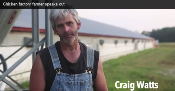 Chicken farmer Craig Watts says that his employer Perdue Farms broke federal whistle blower protection laws with reprisals against him. Photo: screen shot from Compassion in World Farming video
